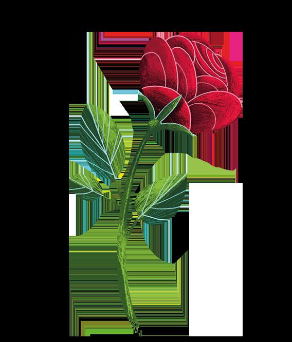 rose-illustration-grimmskrams